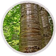 Yellow Birch Near La Chute In Forillon Np-qc Round Beach Towel