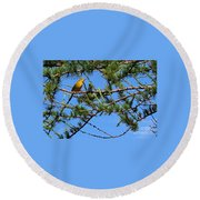 Yellow Bird In A Juniper Tree Round Beach Towel