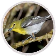 Yellow-breasted Vireo Round Beach Towel