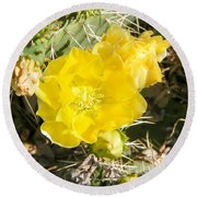Yellow Cactus Blooms And Buds Round Beach Towel
