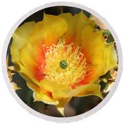 Yellow Cactus Flower Square Round Beach Towel