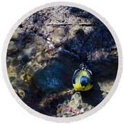 Yellow Chested Birdy Round Beach Towel