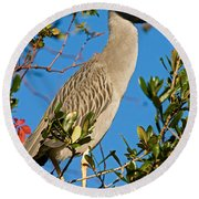 Yellow Crown Night Heron Round Beach Towel
