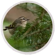 Yellow-crowned Kinglet Round Beach Towel