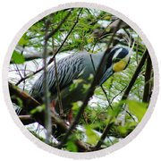 Yellow Crowned Night Heron In Display Round Beach Towel