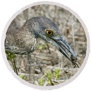 Yellow-crowned Night Heron With Crab Round Beach Towel
