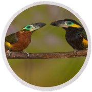 Yellow-eared Toucanet Pair Round Beach Towel