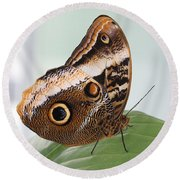 Yellow-edged Giant Owl Butterfly #3 Round Beach Towel