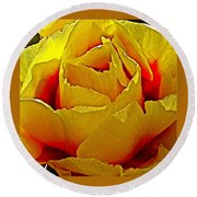 Yellow Engelmann Prickly Pear On Chihuahuan Desert Trail In Big Bend National Park-texas   Round Beach Towel