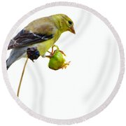 Yellow Finch Round Beach Towel