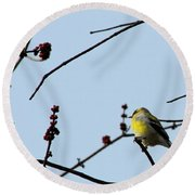 Yellow Finch In Spring Round Beach Towel