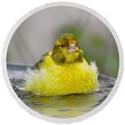 Yellow Finch Round Beach Towel
