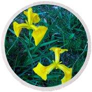 Yellow Flag Iris Round Beach Towel
