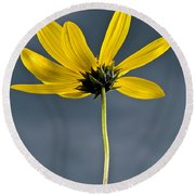 Yellow Flower Against A Stormy Sky Round Beach Towel
