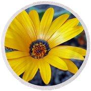 Yellow Flower Helianthus Round Beach Towel