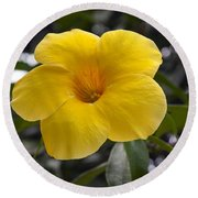 Yellow Flower Of Golden Trumpet Vine Round Beach Towel