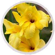 Yellow Gladiolus Round Beach Towel