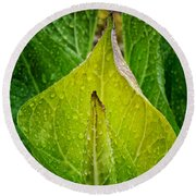 Yellow Green Skunk Cabbage Square Round Beach Towel