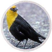 4m09157-02-yellow Headed Blackbird Round Beach Towel
