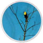 Yellow-headed Blackbird Round Beach Towel