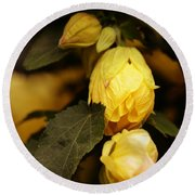 Yellow Hibiscus Late Afternoon Round Beach Towel