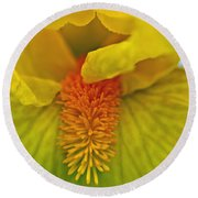 Yellow Iris Beard Round Beach Towel