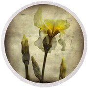 Yellow Iris - Vintage Colors Round Beach Towel