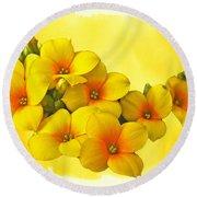Yellow Kalanchoe - Succulent Sunshine Round Beach Towel