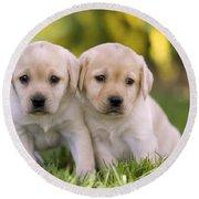 Yellow Labrador Puppies Round Beach Towel