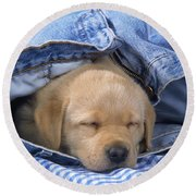 Yellow Labrador Puppy Asleep In Jeans Round Beach Towel