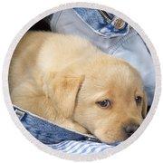 Yellow Labrador Puppy In Jeans Round Beach Towel