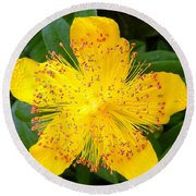 Yellow Lady Pins Round Beach Towel
