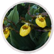 Yellow Lady Slippers On Forest Floor Round Beach Towel