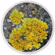 Yellow Lichen Round Beach Towel