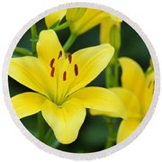 Yellow Lilly 8107 Round Beach Towel
