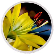 Yellow Lily Anthers Round Beach Towel by Robert Bales