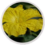 Yellow Luffa Blossom Round Beach Towel