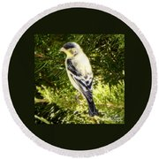 Yellow N Black Finch Round Beach Towel