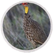 Yellow-necked Francolin... Round Beach Towel