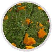 Yellow Poppies Dsc07460 Round Beach Towel
