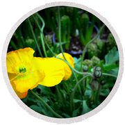Yellow Poppy Xl Format Floral Photography Round Beach Towel