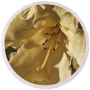 Yellow Rhododendron Round Beach Towel