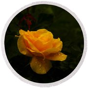 Yellow Rose Dapples With Waterdfrops Round Beach Towel