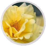 Yellow Rose Macro Round Beach Towel