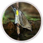 Yellow-rumped Warbler Drinking Round Beach Towel