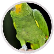 Yellow-shouldered Amazon Parrot Round Beach Towel