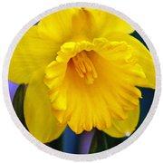 Yellow Spring Daffodil Round Beach Towel