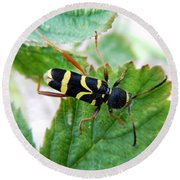 Yellow Stripped Beetle Round Beach Towel