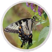 Yellow Swallowtail Butterfly Taking A Drink Round Beach Towel
