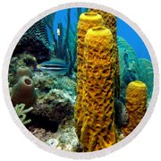Yellow Tube Sponge Round Beach Towel